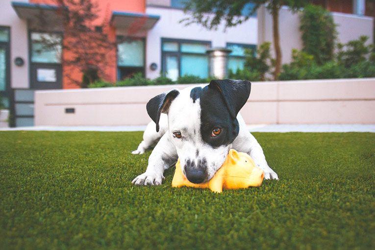 mascotas-cesped-artificial
